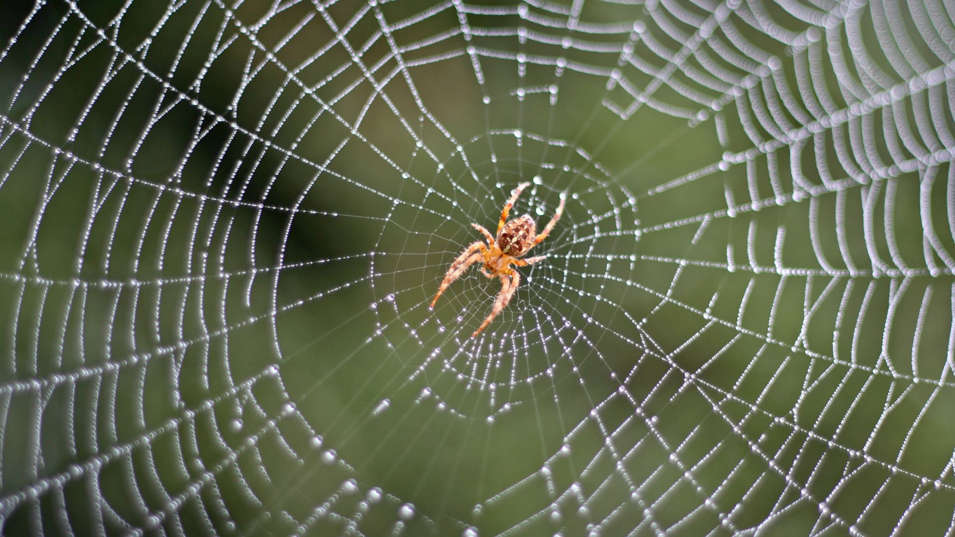 Паяци вдъхновиха разработката на уникален антибактериален материал