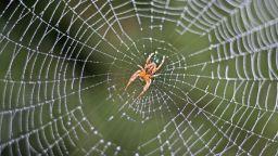 """Учени изследват с изкуствен интелект """"езика"""" на паяците"""