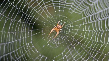 Знаехте ли, че паяците могат да летят и други удивителни факти за животните