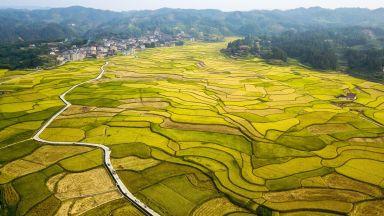 Храните поскъпват за трети пореден месец: задават се зърнени рекорди