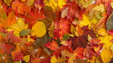 7 кулинарни празника в България през есента