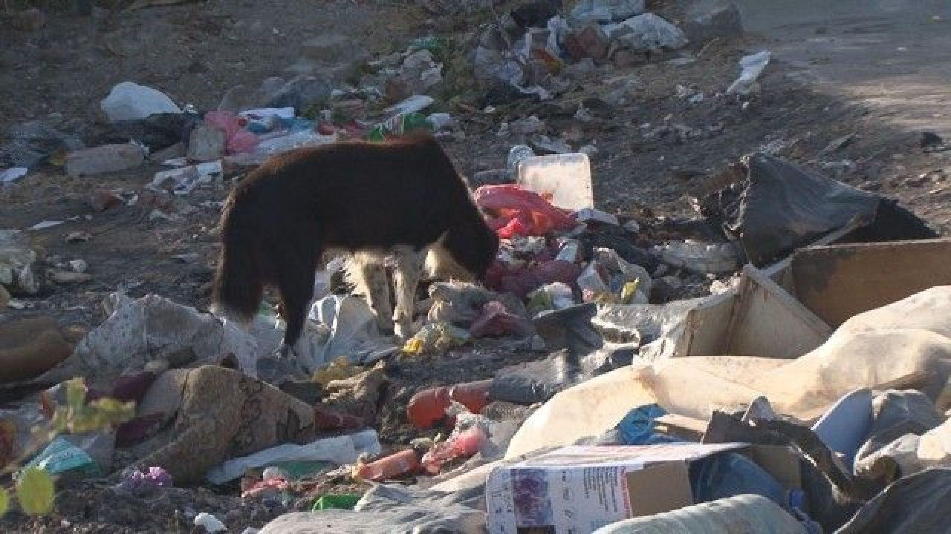 Незаконно сметище в бургаски квартал: Кой трябва да почисти тоновете боклуци?