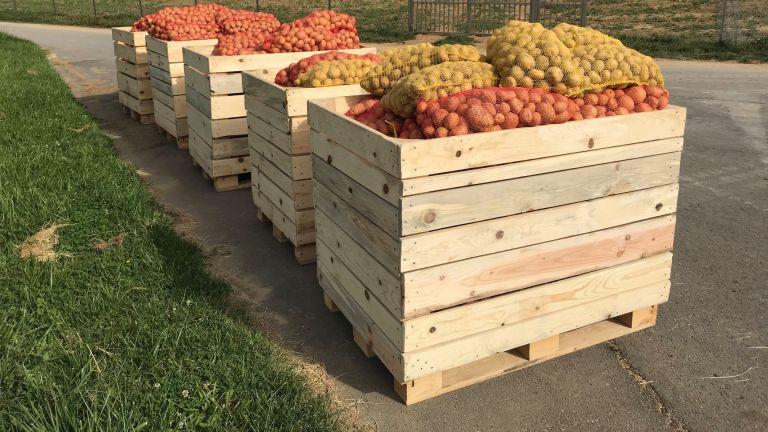 Кюстендилец раздава тонове картофи на хора в нужда (снимки)