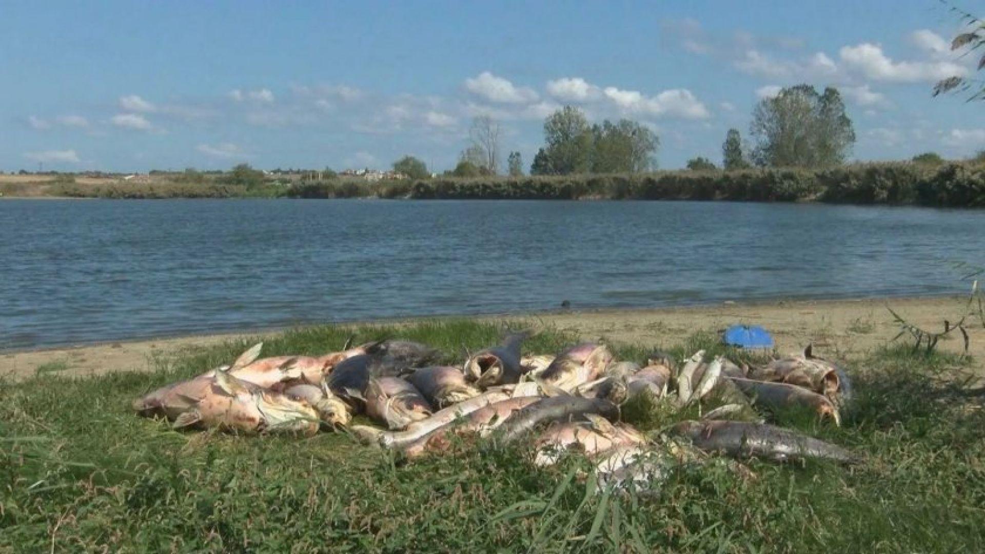 """Откриха мъртва риба в язовир """"Крива круша 1"""""""