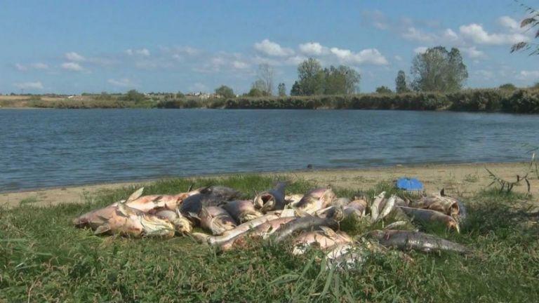 Басейнова дирекция и РИОСВ-Бургас проверяват сигнал за мъртва риба в