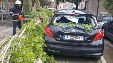 Топола се счупи и премаза паркиран автомобил в Хасково (снимки)