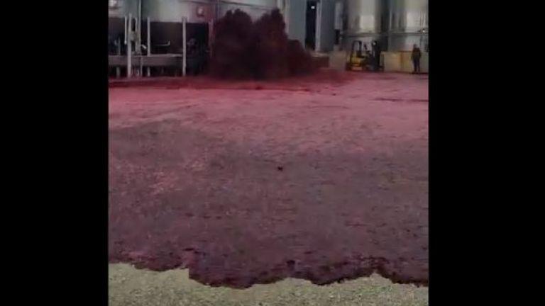 Хиляди литри червено вино се изляха в завод