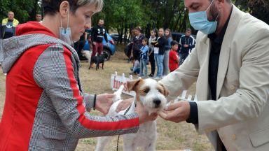 Близо 200 кучета се състезават за медали на изложба в Харманли (снимки)