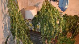 Шестима в ареста за разпространение на близо 80 кг марихуана