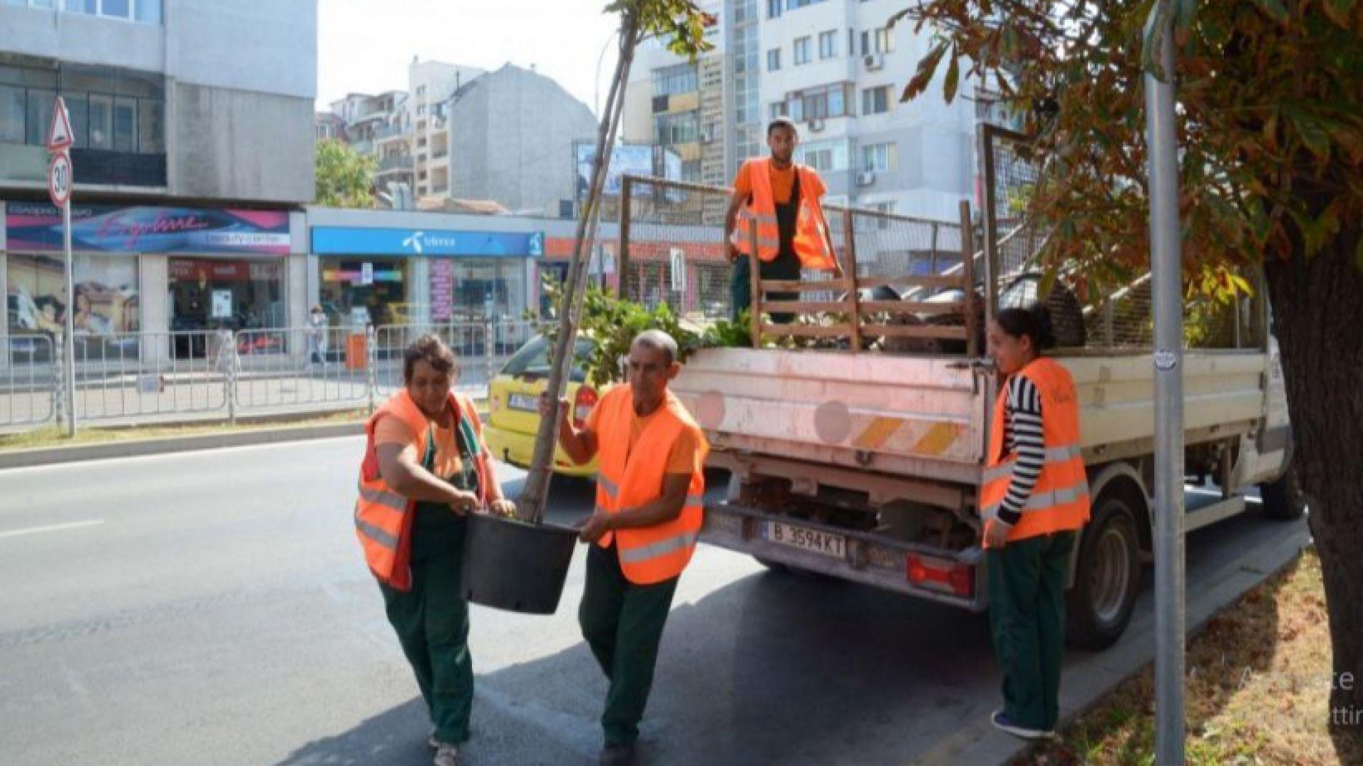 Засаждат 40 нови дръвчета във Варна