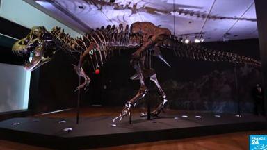 Скелет на тиранозавър беше продаден на търг за рекордните 31,8 млн. долара