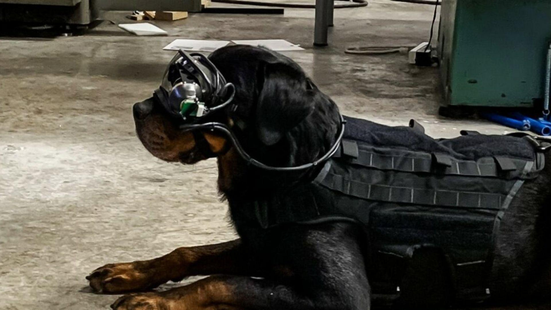 Пентагонът слага умни очила на бойните си кучета