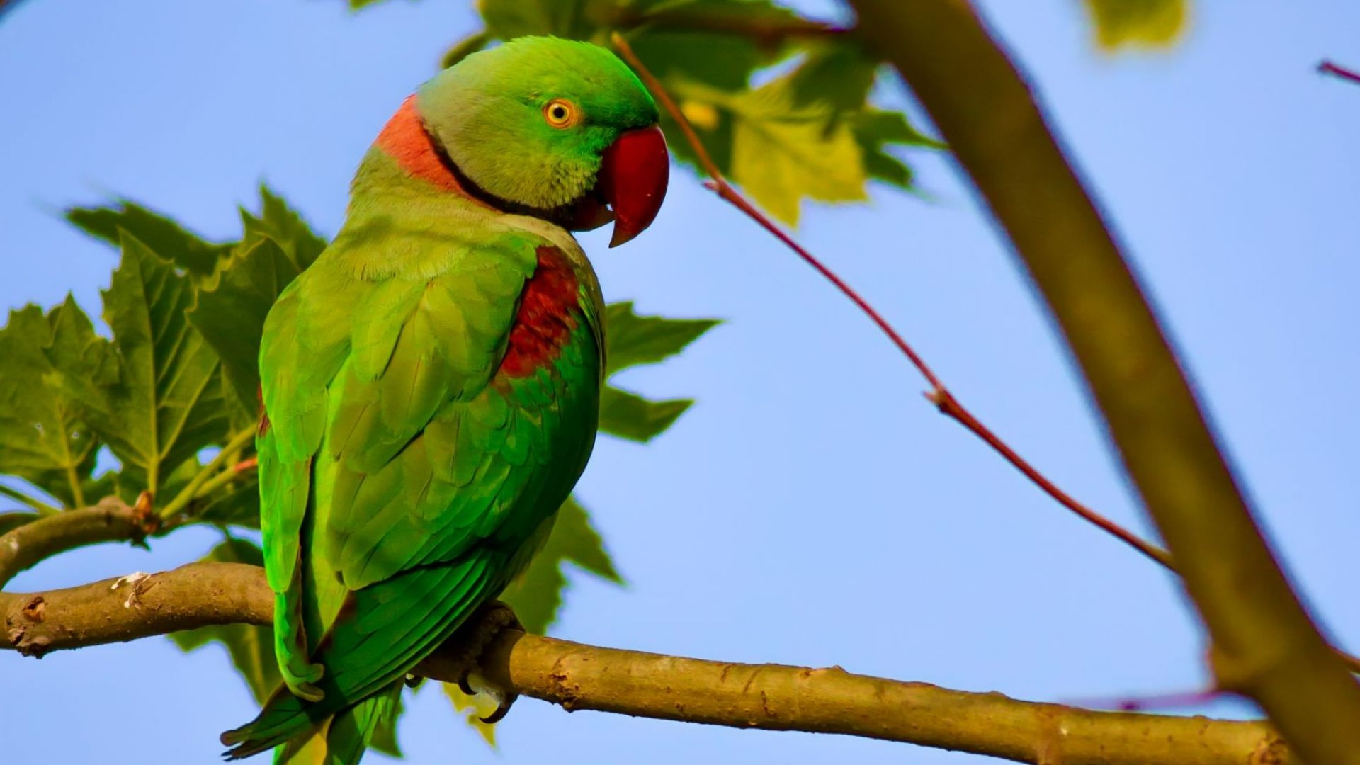 Зелени папагали завземат Истанбул (видео)