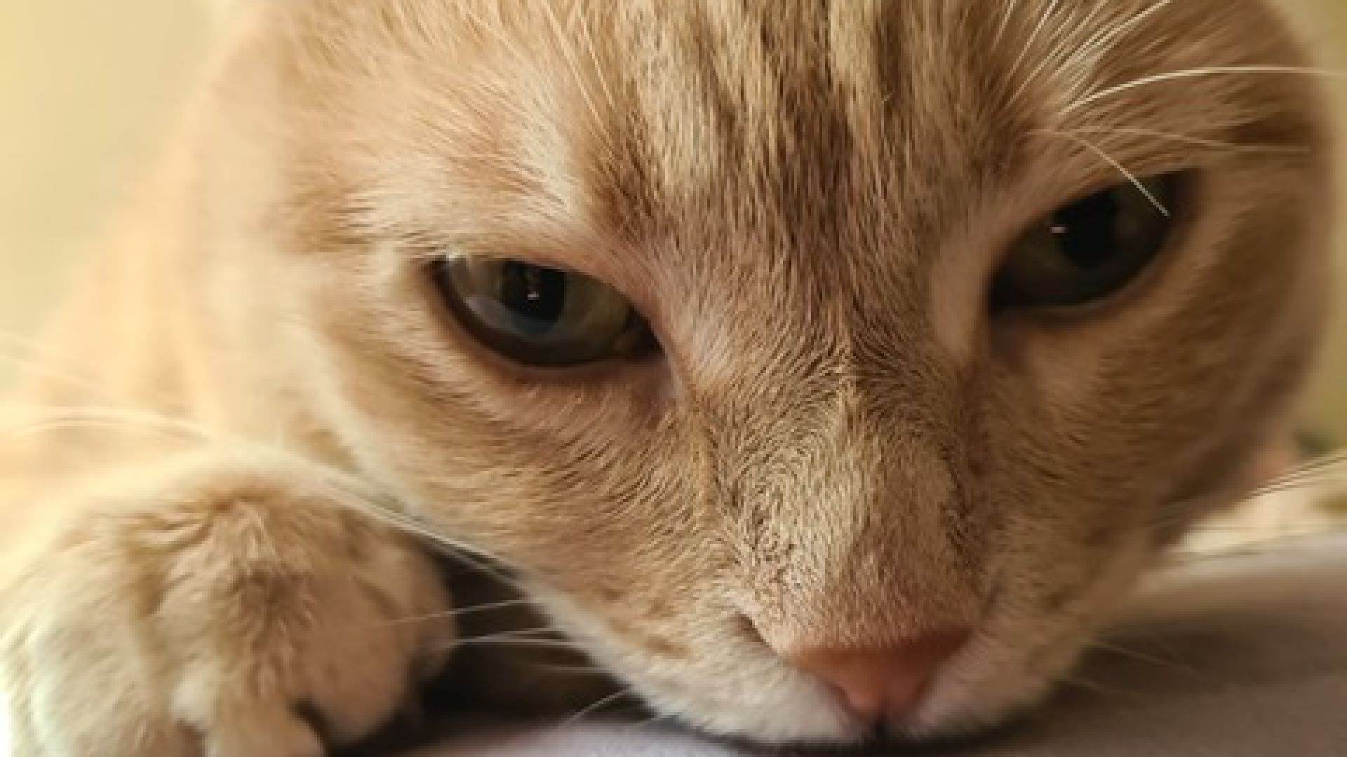 Шаферката или котката? Когато Николаос срещна Карма ...