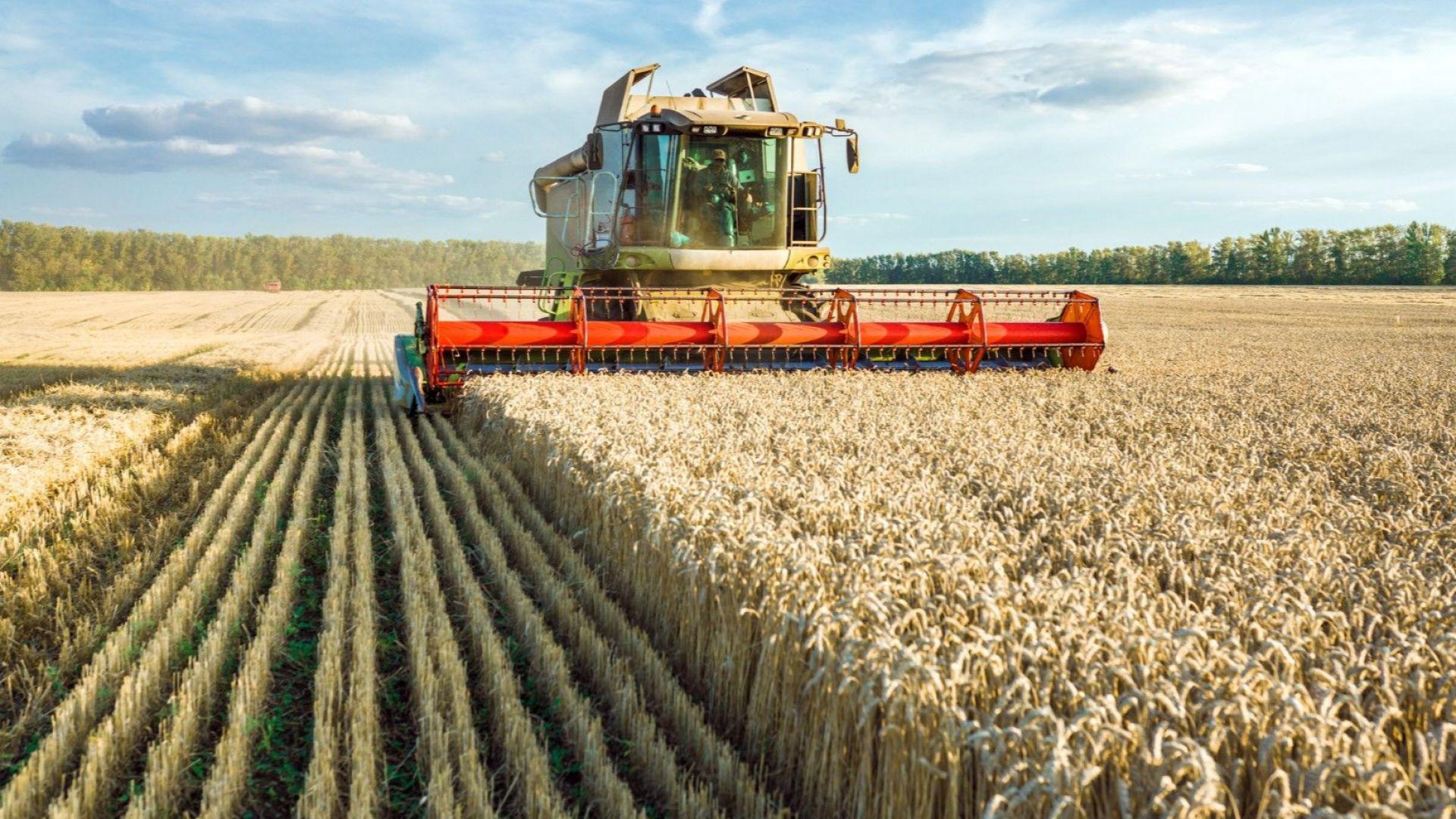 Селскостопанският износ на Русия расте: най-много за Китай, Турция, Южна Корея