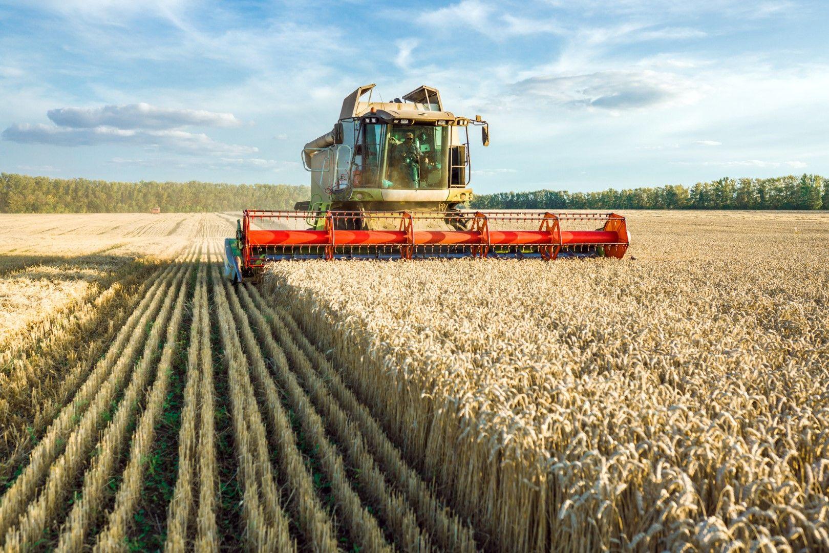 20-годишен рекорд: Над 7 милиона тона пшеница е ожъната това лято в България