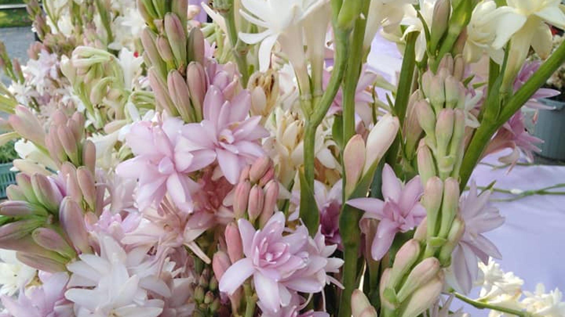 Време е за есенни цветя , откриха изложението в Бургас (снимки)