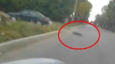 Шофьор е заснет да влачи куче, вързано за колата му (видео)