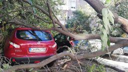 Голямо дърво рухна върху коли в центъра на Пловдив
