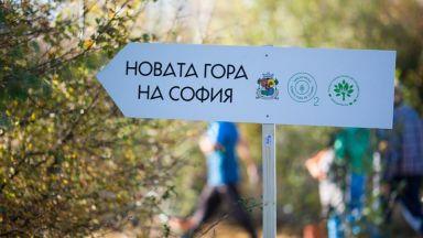 Над 80 000 млади фиданки вече растат в Новата гора на София