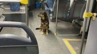 Мориц се повози в градския транспорт, но накрая намери стопанина си