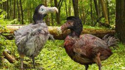 Защо са изчезнали птицата додо и гигантският лемур на Мадагаскар
