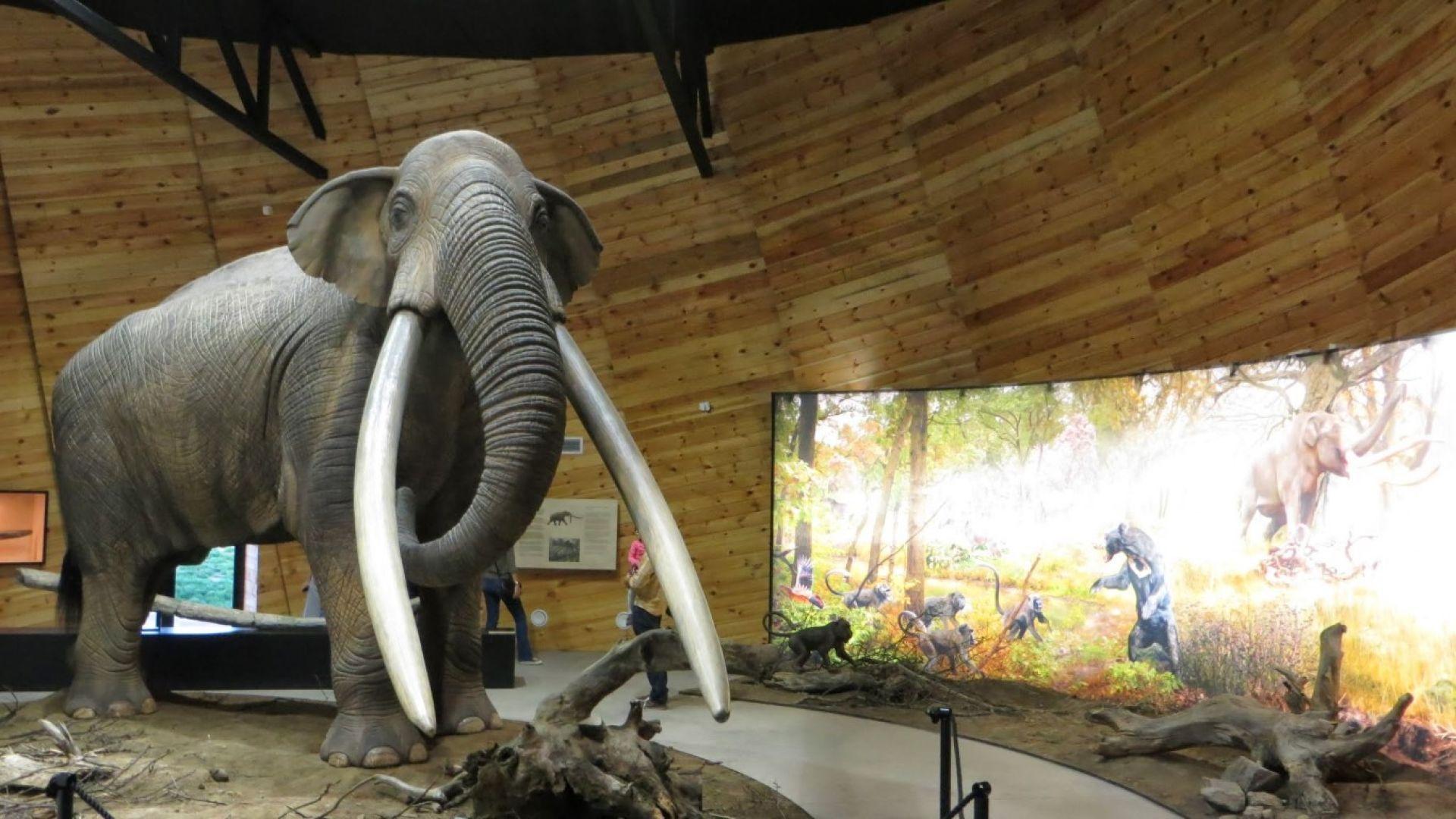 Плиоценски парк Дорково - мастодонтът е голямата му звезда