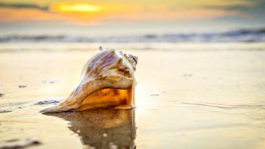 Древни раковини разкриват причината  за най-масовото измиране в историята