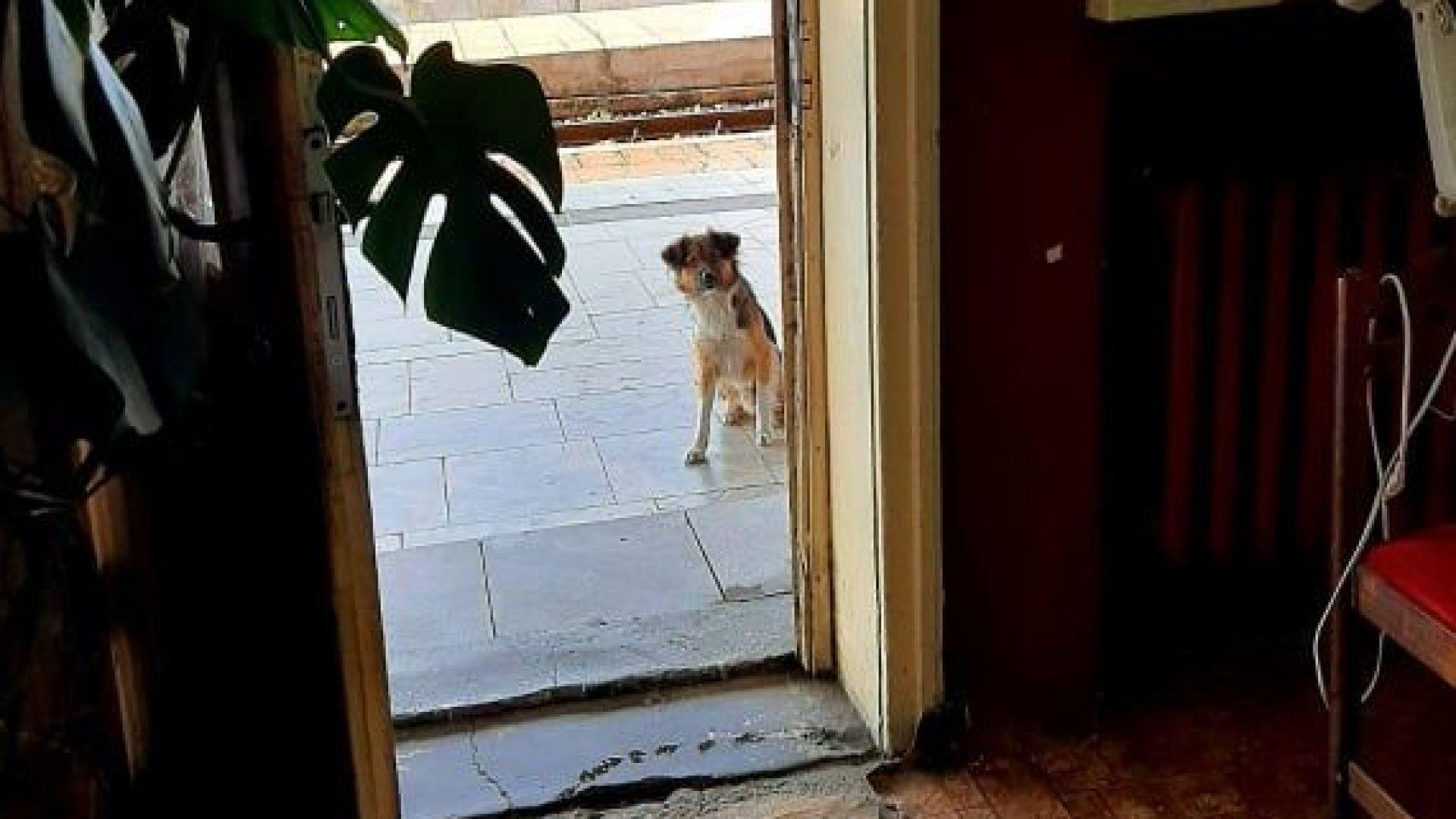 Новото куче се оглежда и се чуди дали ще го пуснат