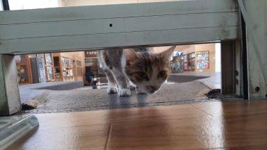 Рошко вече не пази гара Мездра, но там е Маца - тя продава билети (снимки)