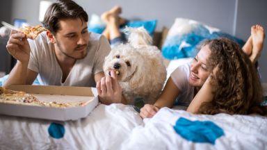 Кучето ви не е прасе - не му давайте човешка храна!
