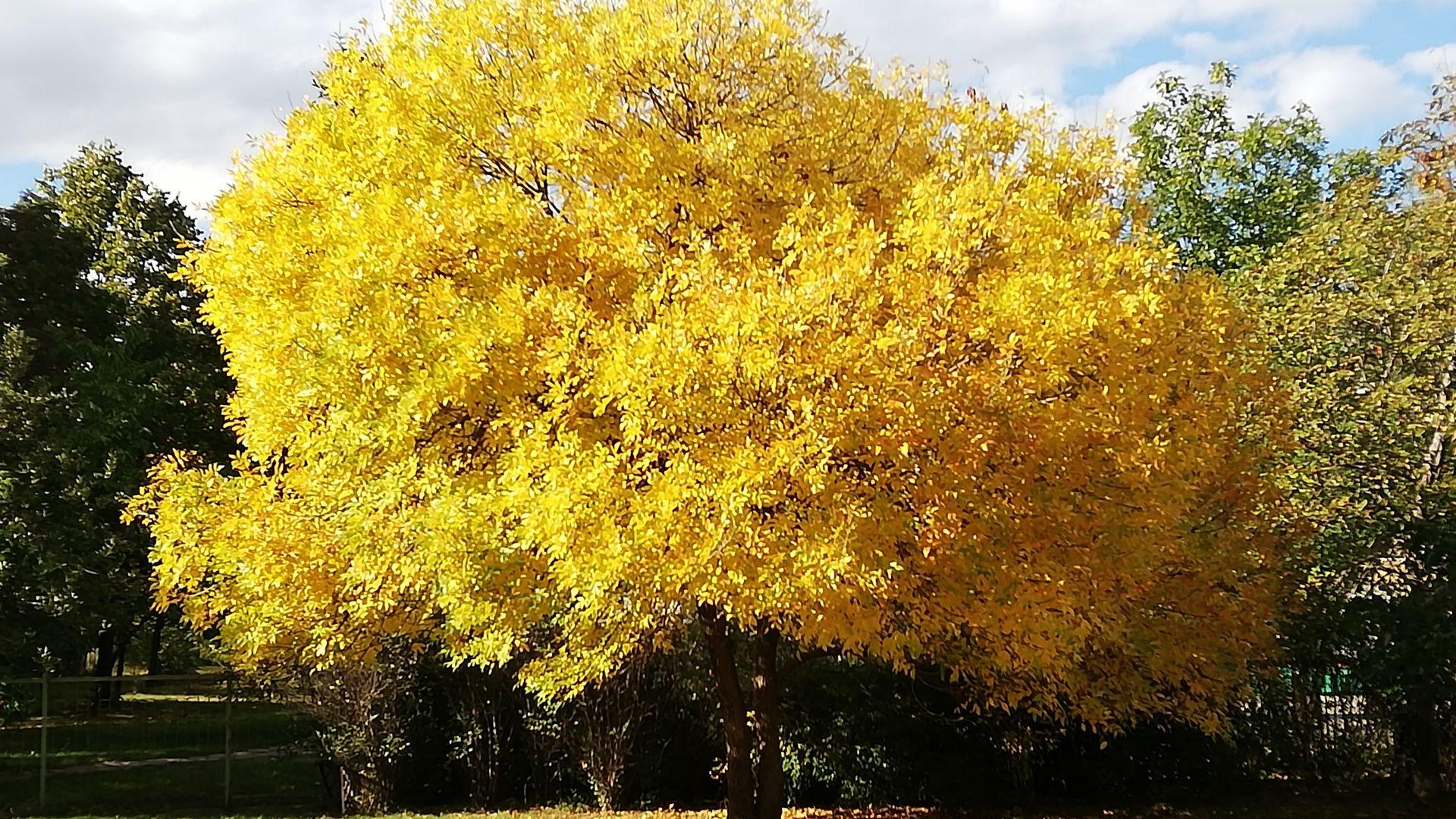 Есента рисува неописуеми картини