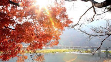 Ноември: На лов за есенни листа като японците