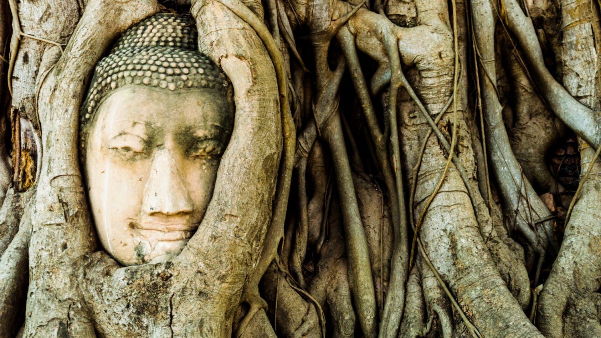 Главата на Буда в Аютая