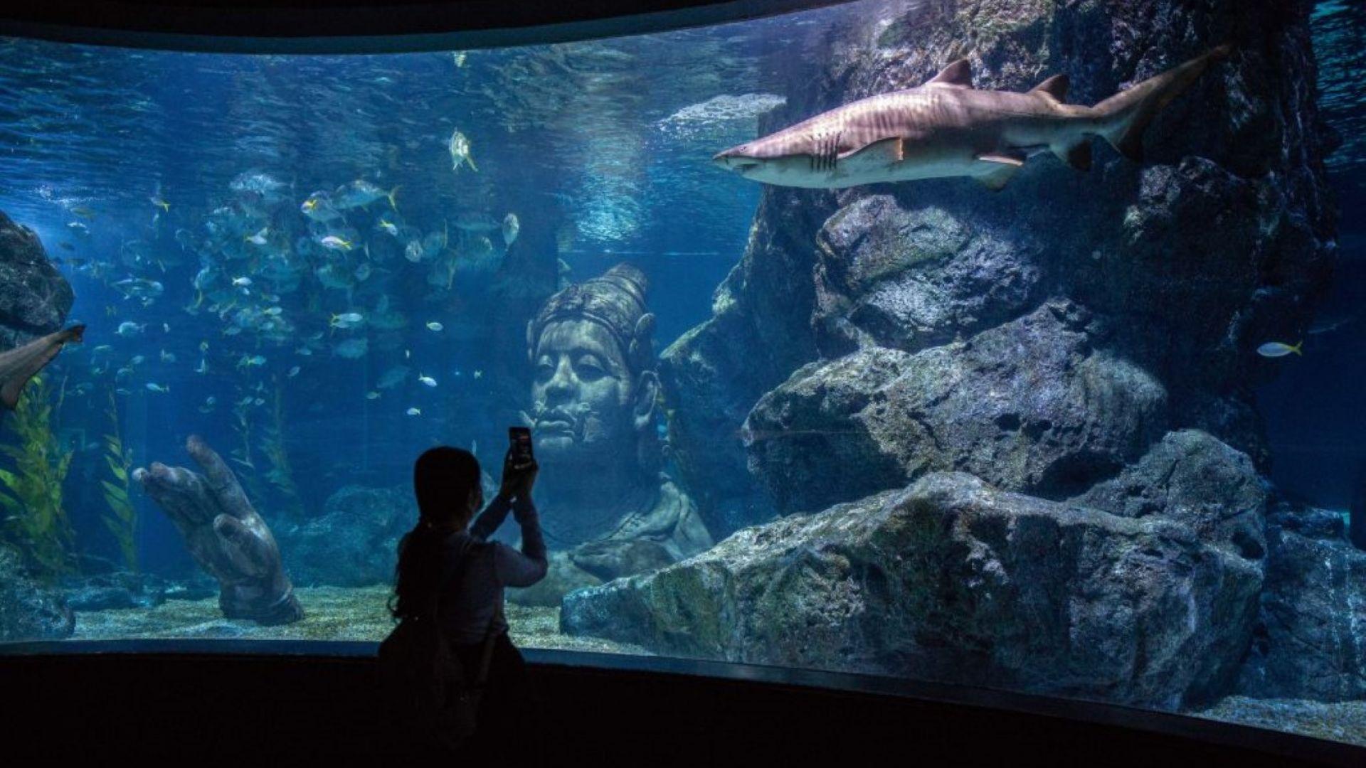 Аквариумът Sea Life в мол Сиам Парагон