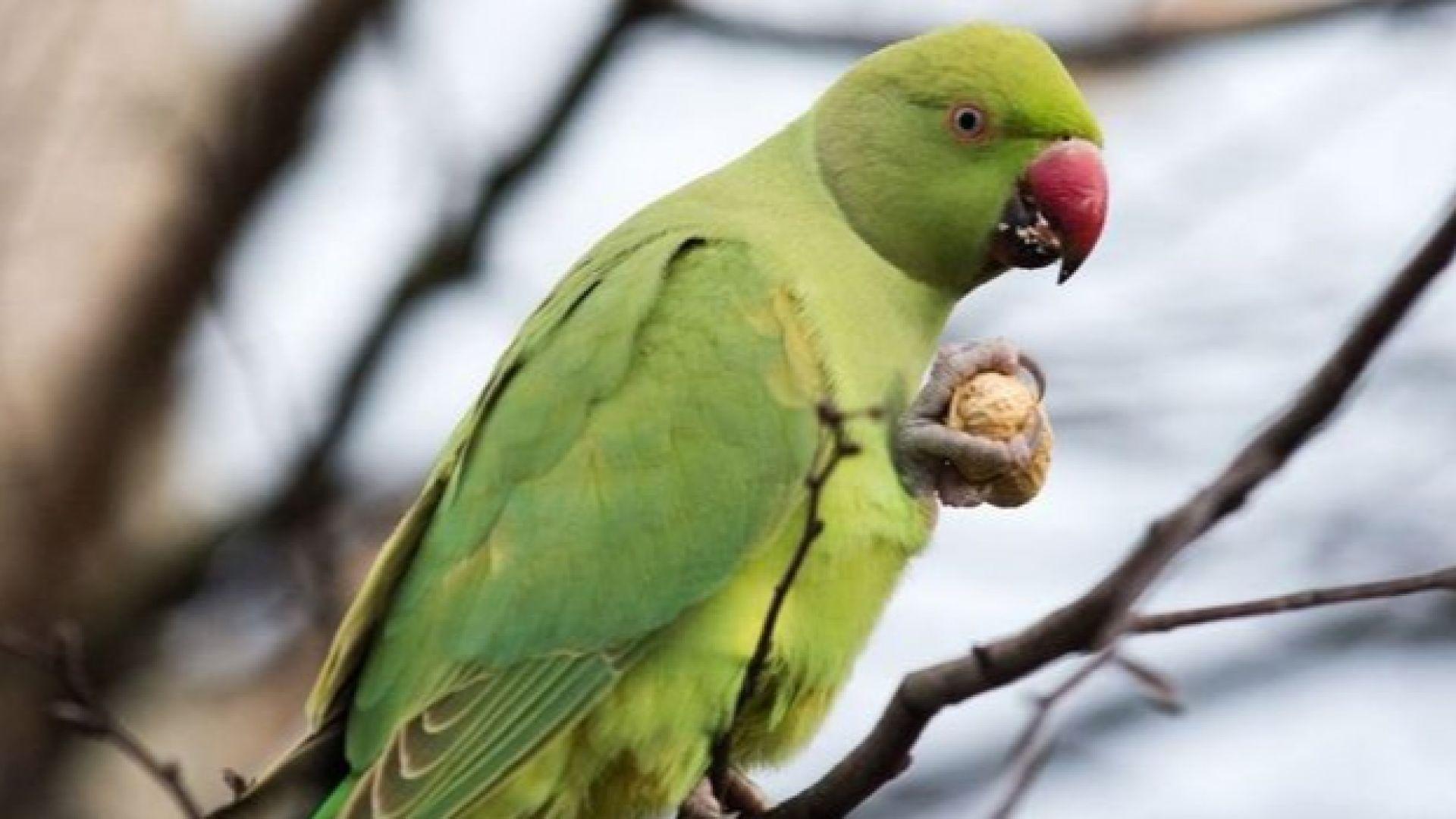 Папагалът Ерик спаси стопанина си от пожар