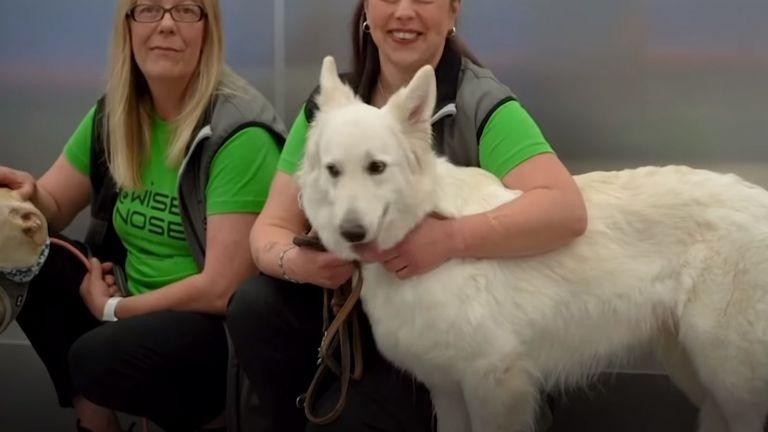 Специално обучените кучета вече се справят по-бързо и по ефективно