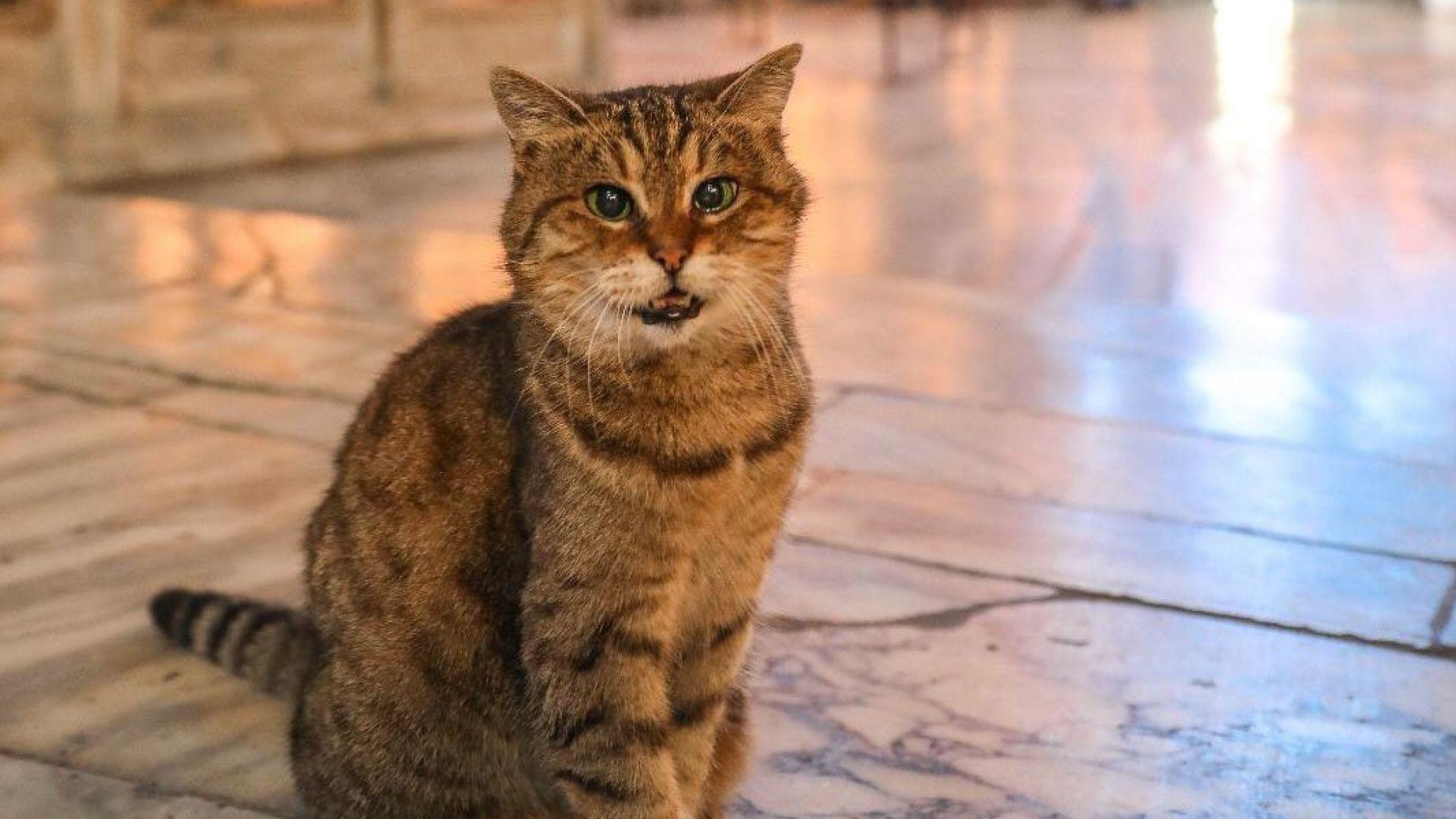 """Отиде си котето Гли, един от символите на """"Света София"""" в Истанбул"""