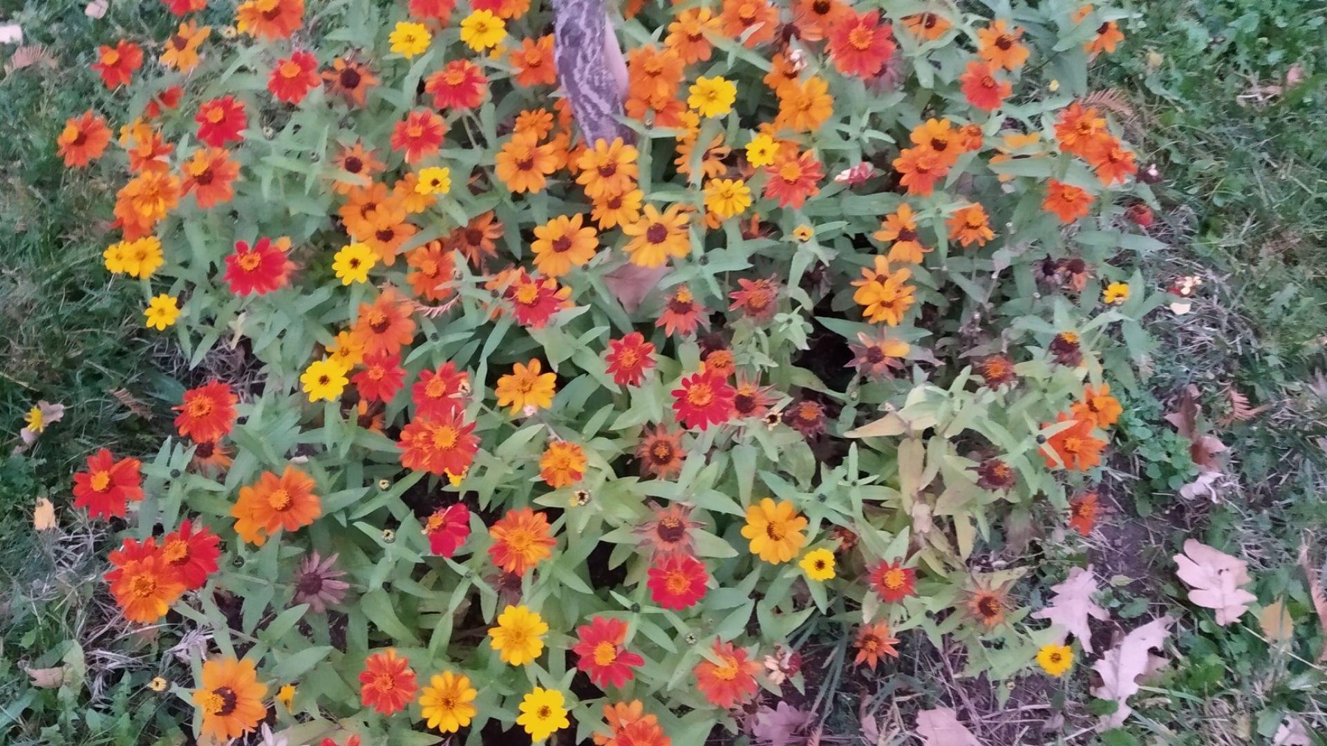 Сезонна разпродажба в Ботаническата градина на БАН