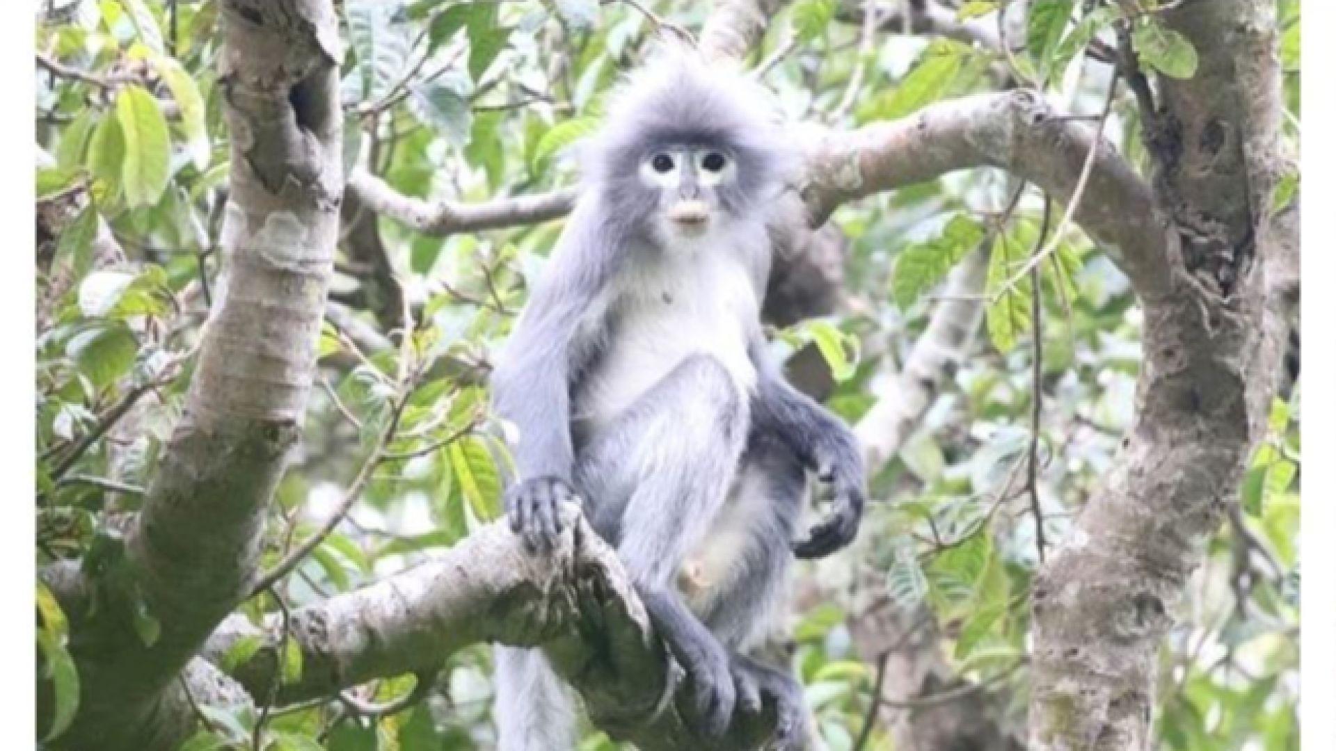 Откриха нов вид маймуна