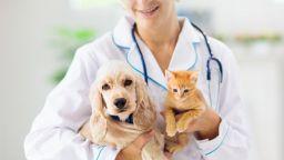 Учени сравниха умствените способности на кучетата и котките