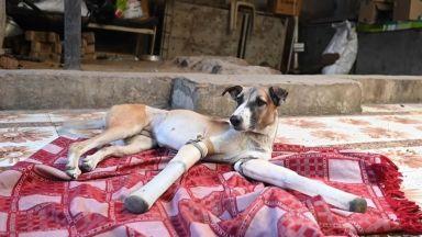 Съдбата на индийско куче трогна сърцата на милиони хора по света