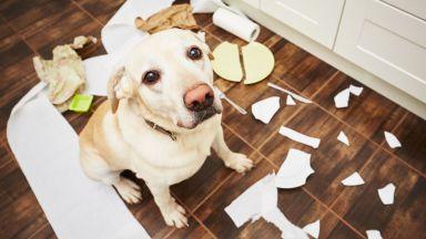 Кучето не е виновно! Помни белята само 1 секунда