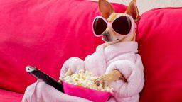 """Kакво виждат кучетата и котките, когато """"гледат"""" телевизия"""