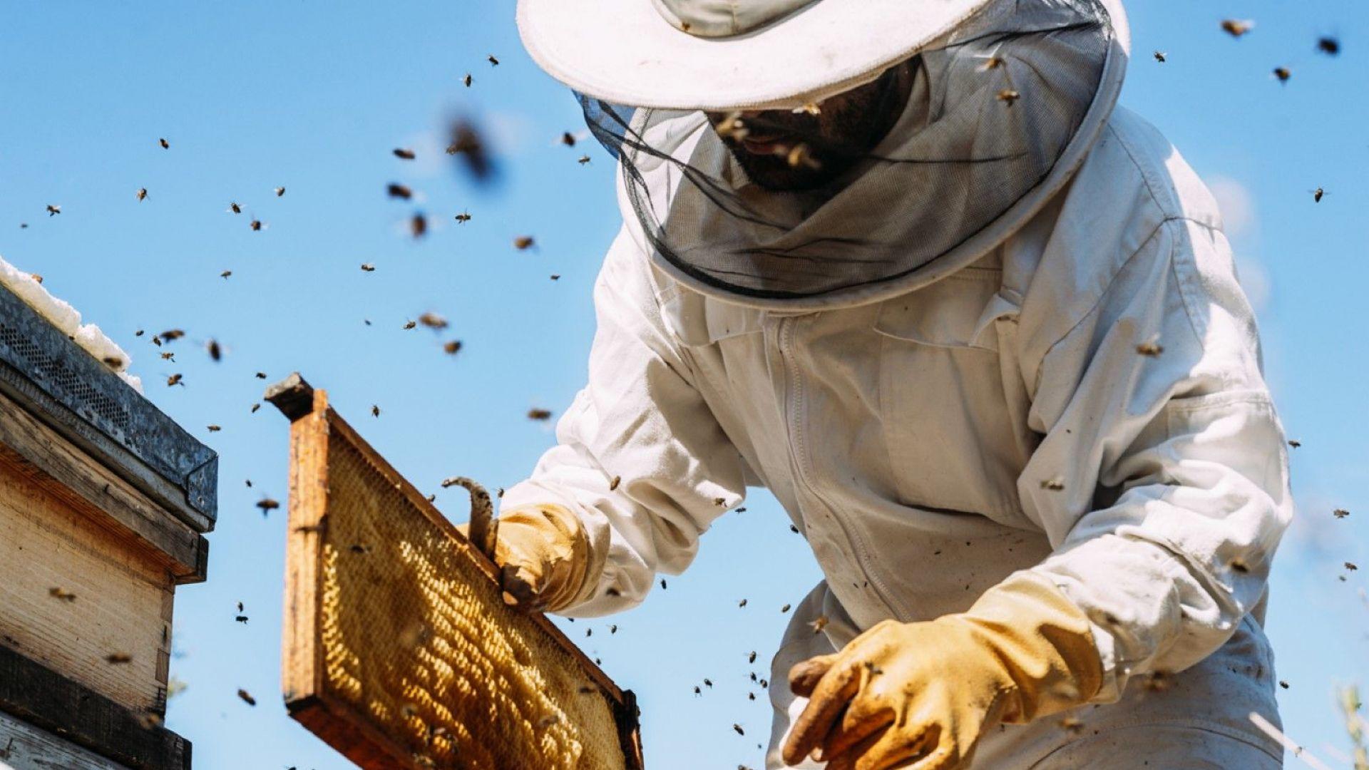 Защо пчеларите не се разболяват от COVID-19?