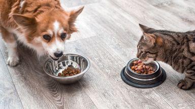 Хранителни вещества и съставки - правите ли разлика и какво може да се обърка с домашния ви любимец?