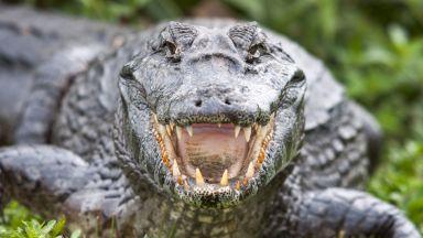 Смелчага спаси кучето си от устата на алигатор (видео)