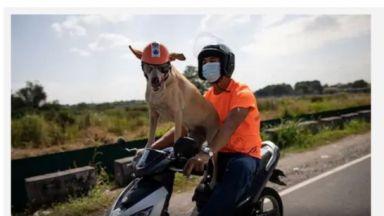 Кучето Боги, което обича да се вози на мотор