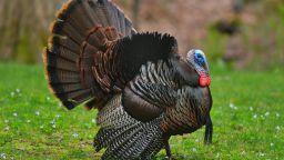 Великобритания унищожава над 10 000 пуйки заради птичи грип