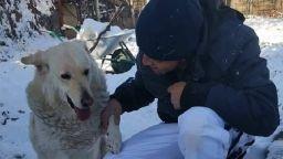История с щастлив край: Намушканото с нож куче Белчо намери дом
